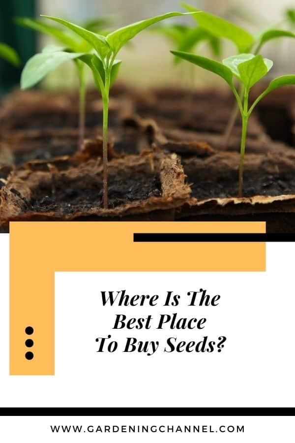seedlings with text overlay where is the best place to buy seeds