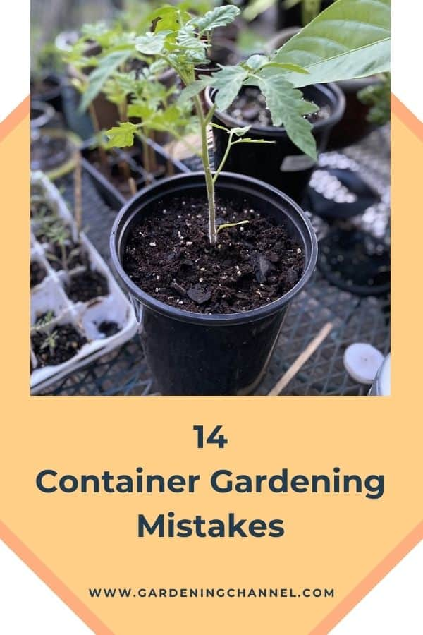 pepper plants in containers with text overlay fourteen container gardening mistakes