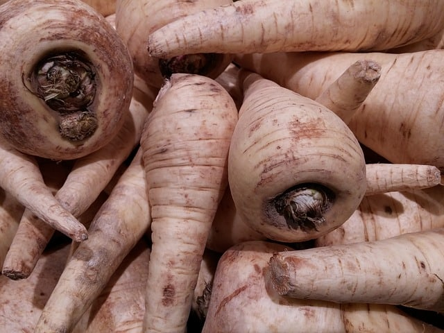 harvest parsnips