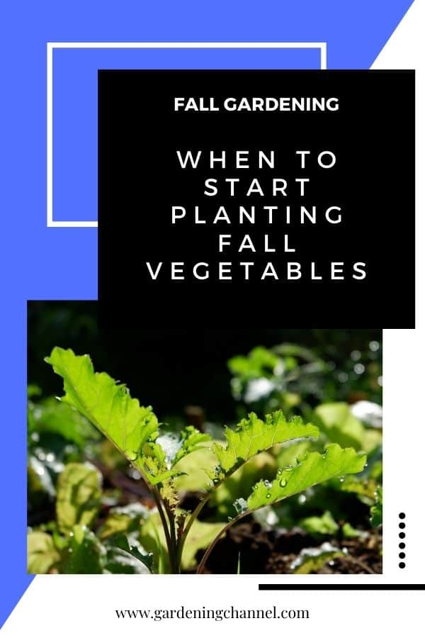 kale in garden with text overlay fall gardening When to start planting fall vegetables