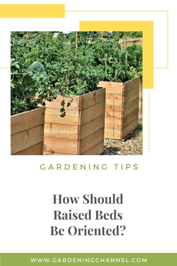 raised bed gardens with text overlay gardening tips How Should Raised Beds Be Oriented?