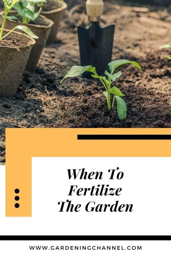 planting a garden with text overlay when to fertilize the garden