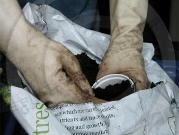 Taking potting compost from the bag