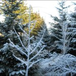 Protect your garden against the frost and ice