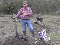 Planting Bare Root Fruit Trees