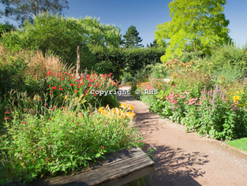 The Queen Mother's Garden in summer at RHS Garden Hyde Hall.