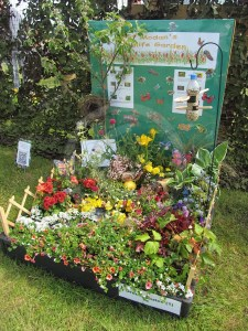 A colourful pallet garden