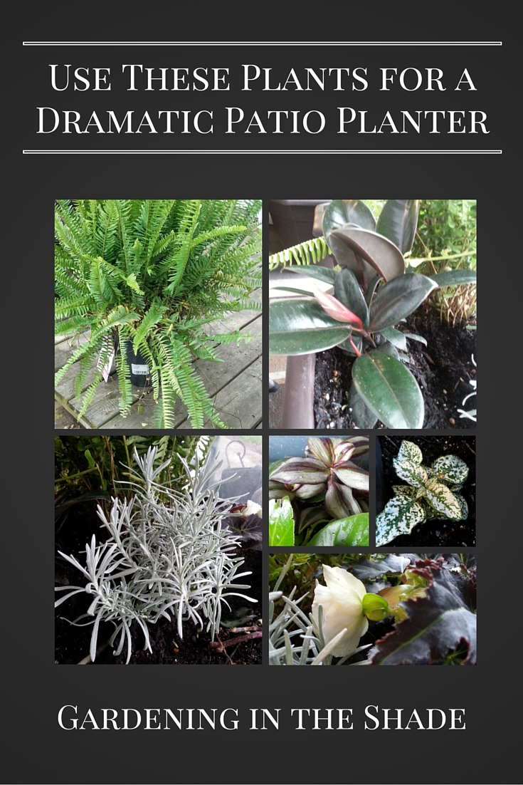 Dramatic Patio Planter Plants