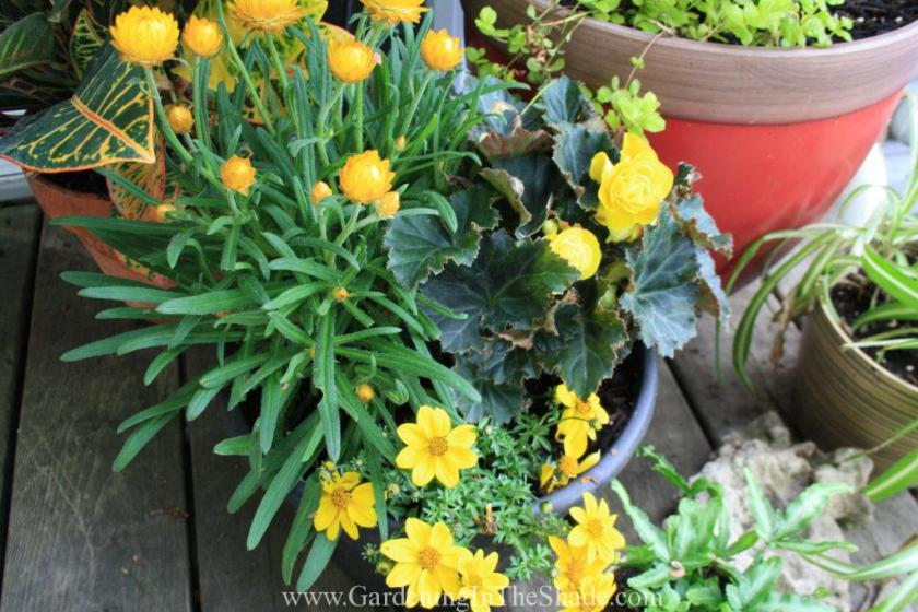 Sunny Yellow Planter with Bidens