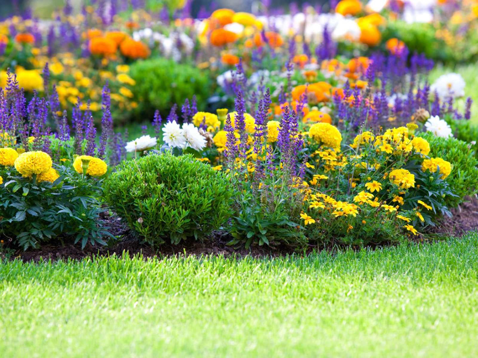 Flower Gardening How To Start A Flower Garden