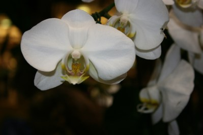 Indoor Orchid Care How Do I Take Care Of An Orchid Flower