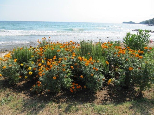 Seaside Plants And Flowers How To Choose A Seaside Plant