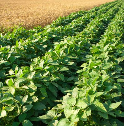 Cover Crops Planting Dates Best Time For Planting A Cover Crop