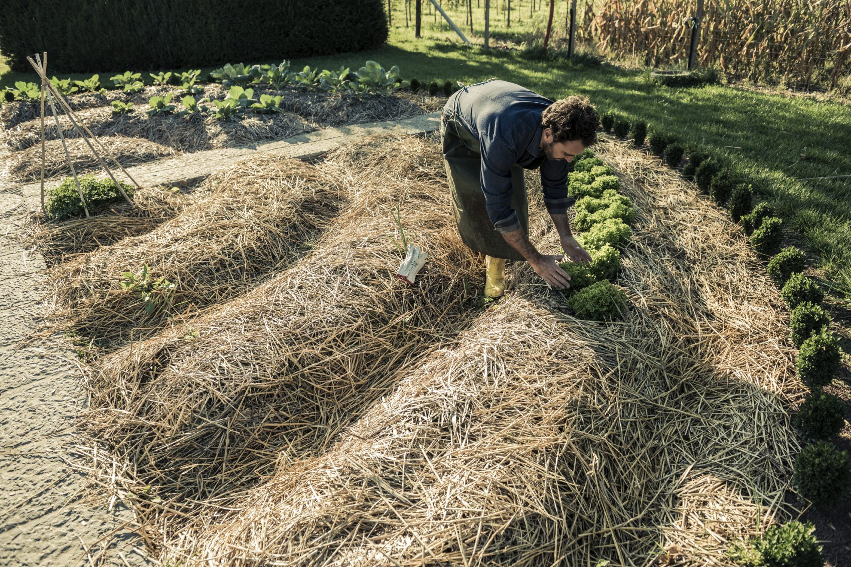 Mulching Veggie Beds How And When To Add Mulch In Vegetable Gardens
