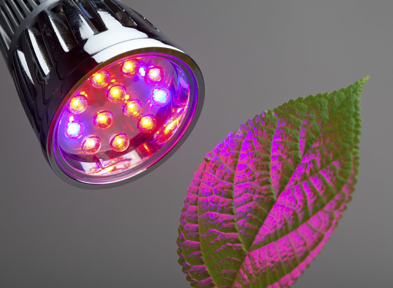 Red Light Or Blue Light For Plants Effects Of Red And Blue Light