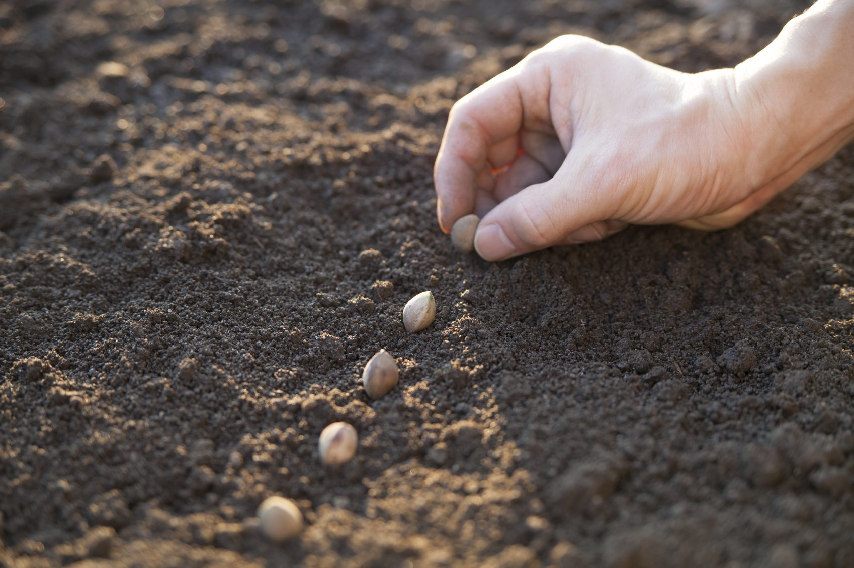 What Is Direct Sowing Learn How And When To Sow Seeds Outdoors