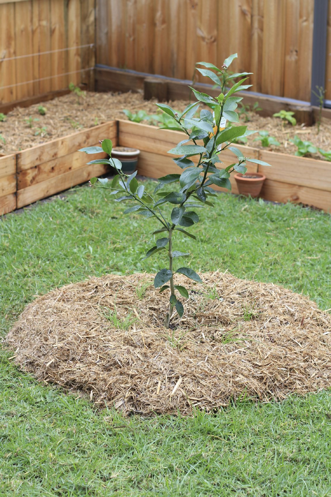 Fruit Trees In Gardens - Ideas For Planting Fruit Trees In ... on Backyard Landscaping Ideas With Trees id=88973
