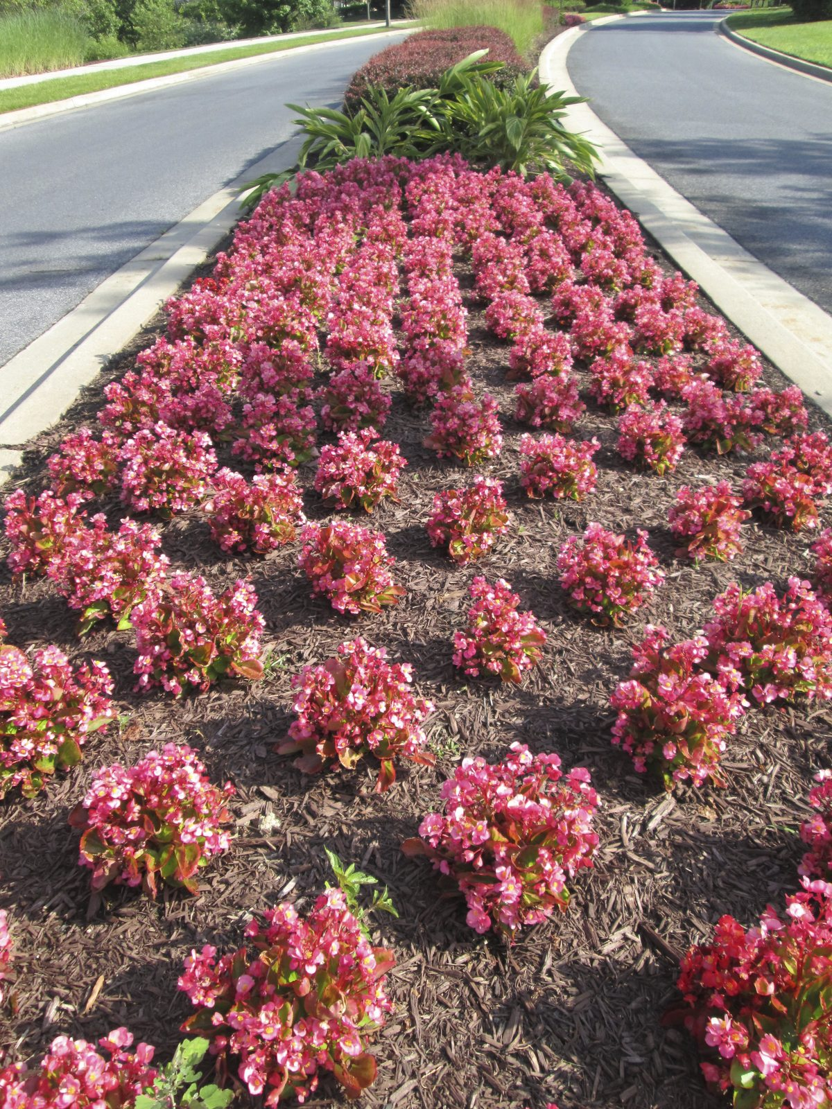 Perennial Hell Strip Plant Choices Learn About Hell Strip
