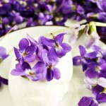 Can You Eat Violet Flowers Learn About Edible Violet Plants