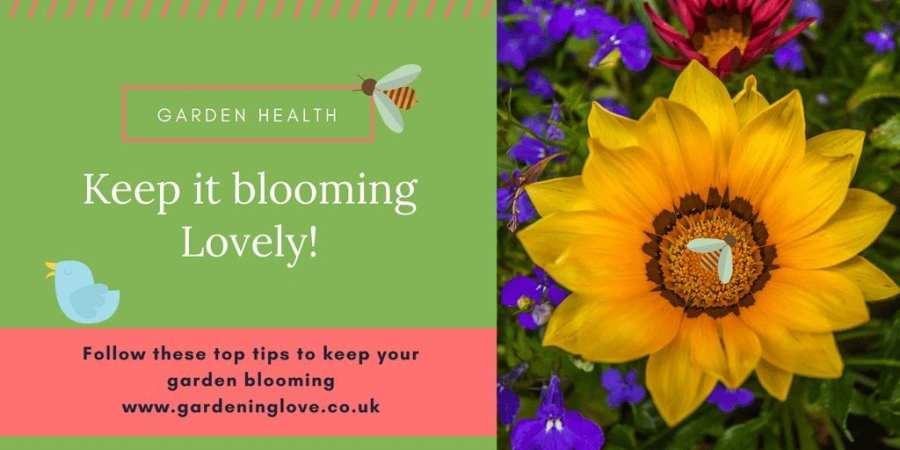 Garden heath, keep it blooming lovely
