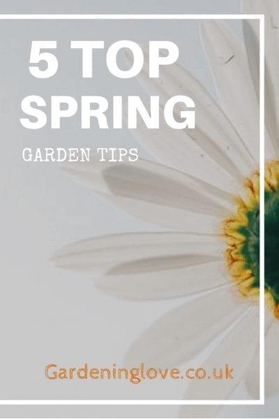 5 top spring garden tips.