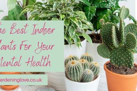 Best indoor plants for mental health
