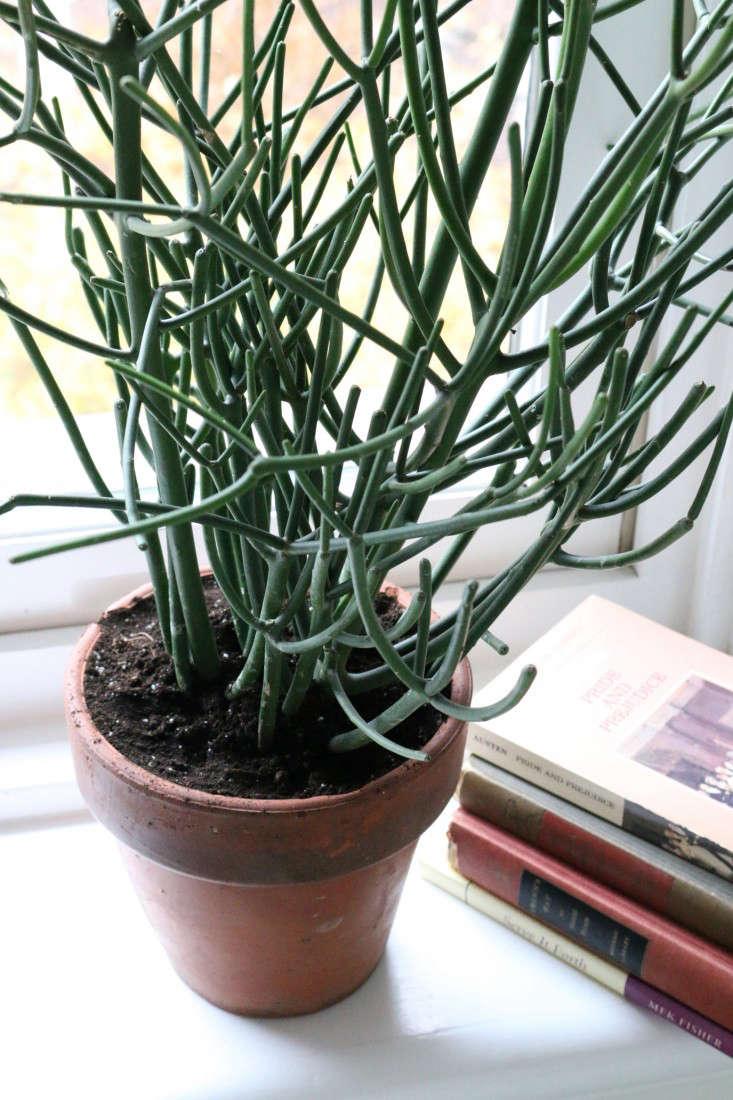 The New It Houseplant Gardenista