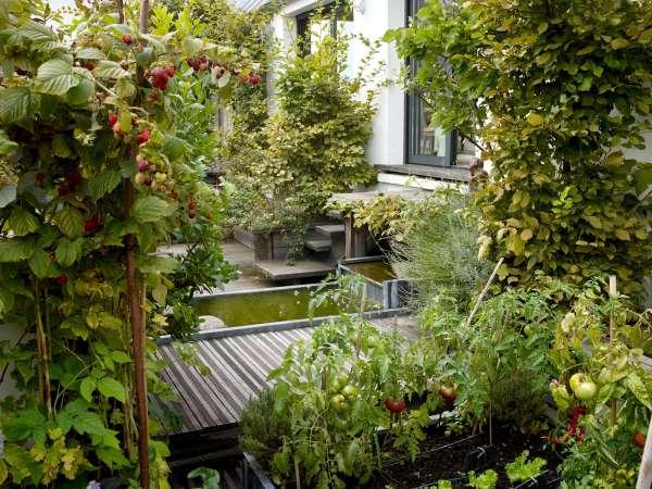 rooftop garden Secret Paris: A Tiny Roof Garden with an Eiffel Tower View
