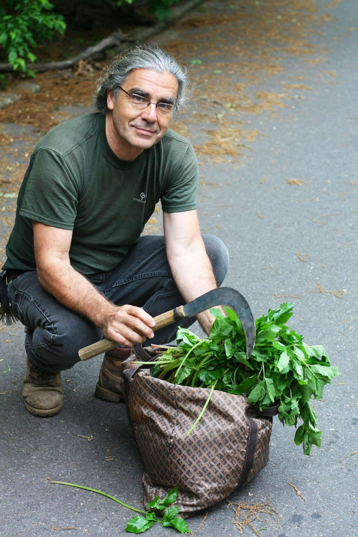 L'enlèvement de plantes des parcs de la ville de New York est illégal par Marie Viljoen