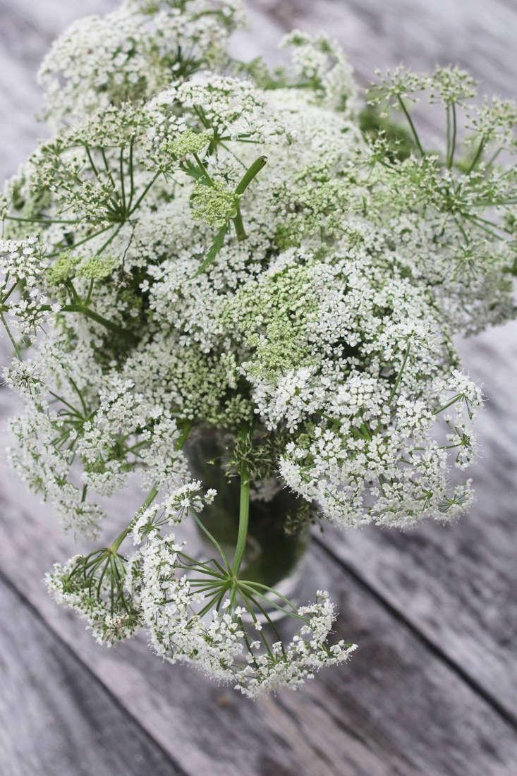Fleurs anciennes au sol de Marie Viljoen