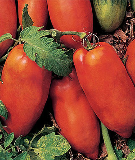 best-tomatoes-to-grow-in-a-container_4