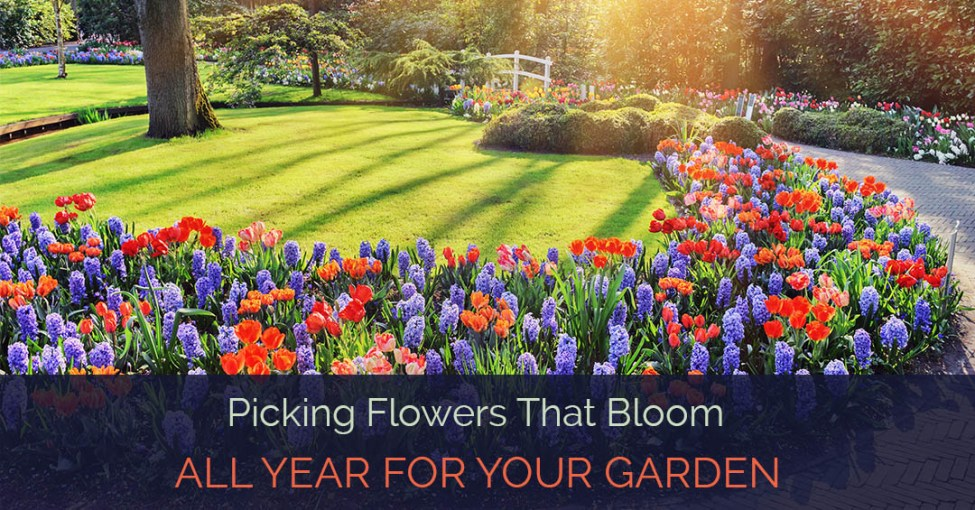 flowers-that-bloom-all-year_fe