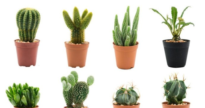 how-often-do-you-water-a-cactus-5