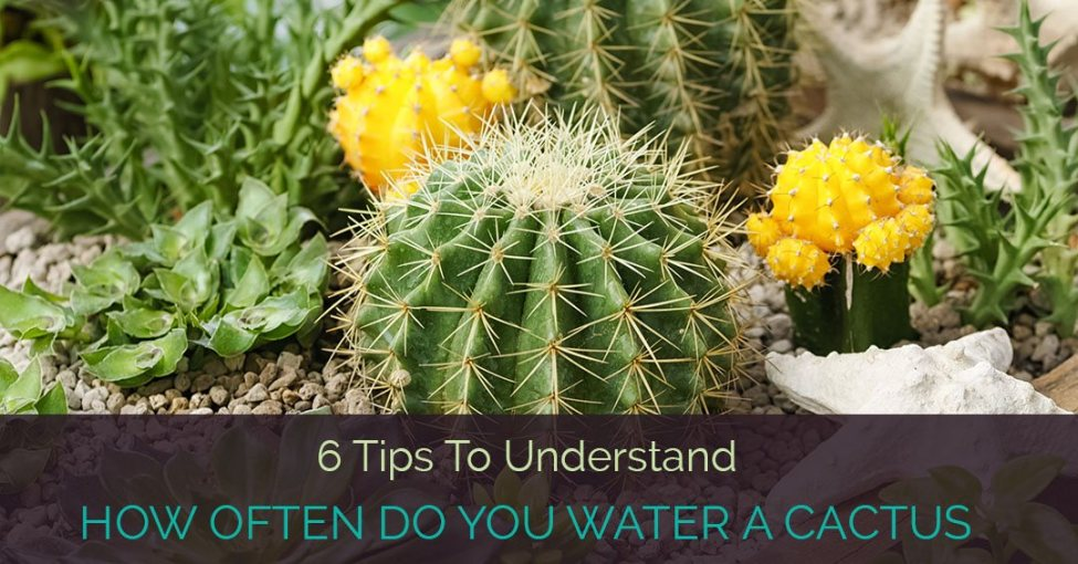 how-often-do-you-water-a-catus