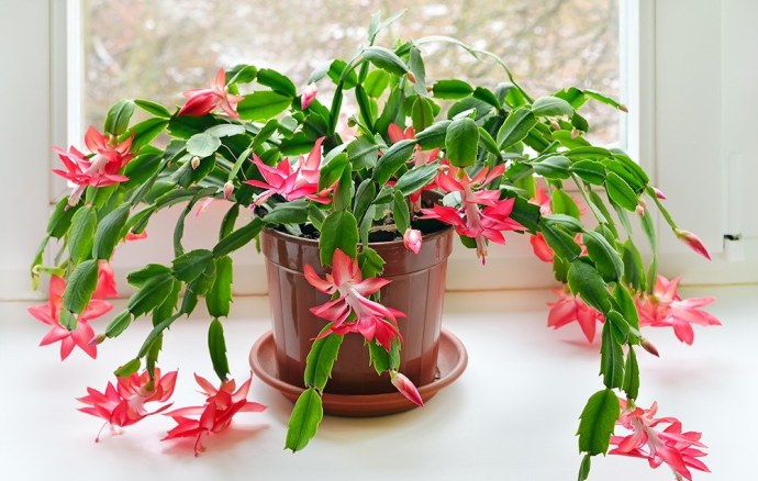 indoor-cactus-types-2