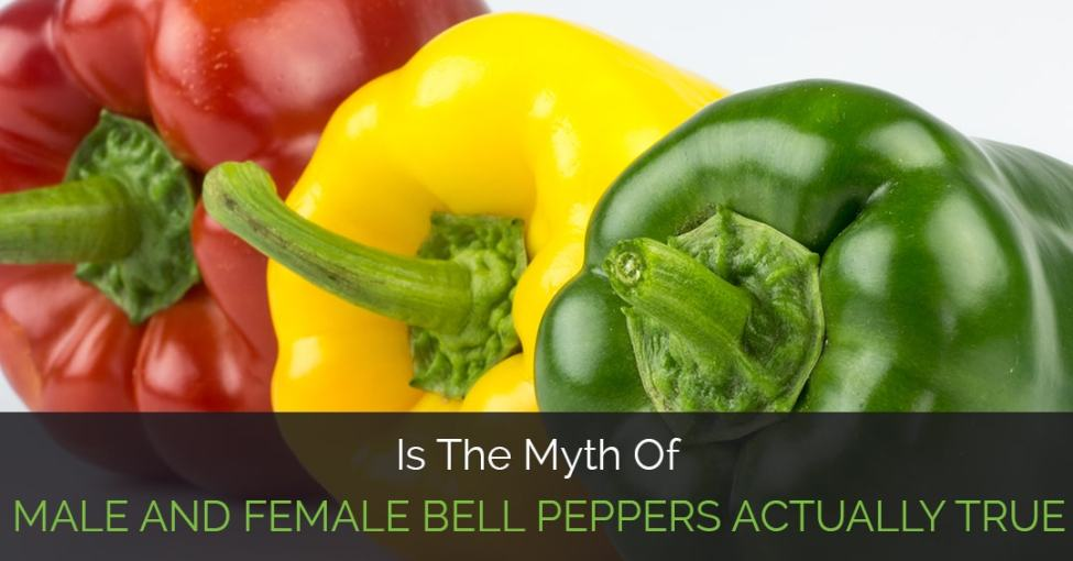 male-and-female-bell-peppers