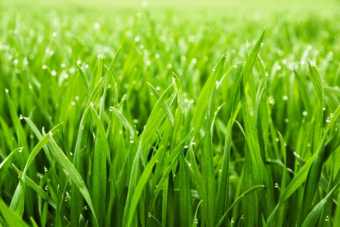 when-does-grass-stop-growing-2