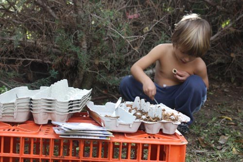 gardening-with-kids-seed-egg-carton