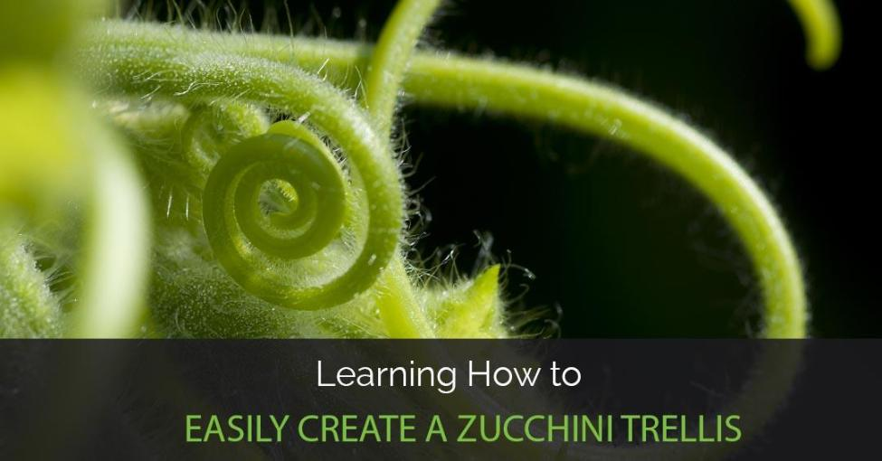 zucchini-trellis