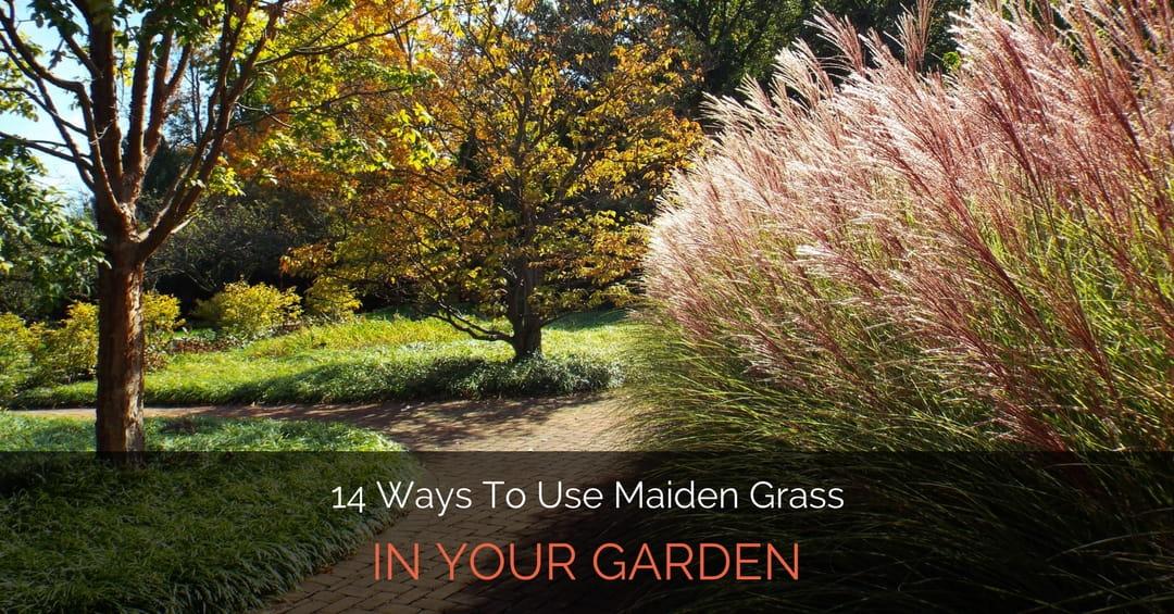 14 Ways To Use Maiden Grass In Your Garden - Garden Loka