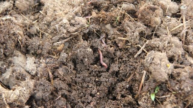 manure-as-natural-fertilizer