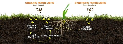 synthetic-vs-organic-fertilizer