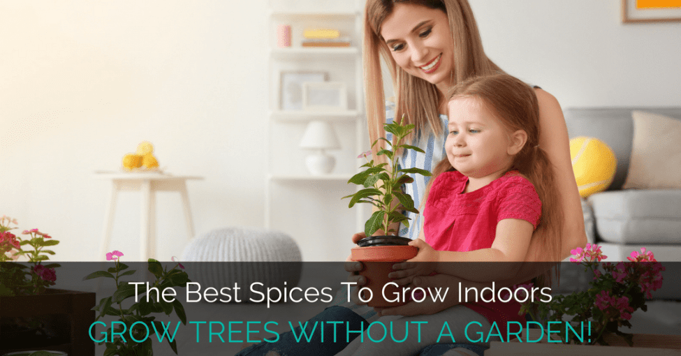best species to grow indoors