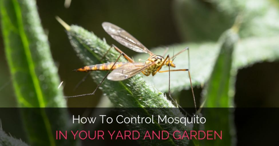 control-mosquito-in-yard-and-garden