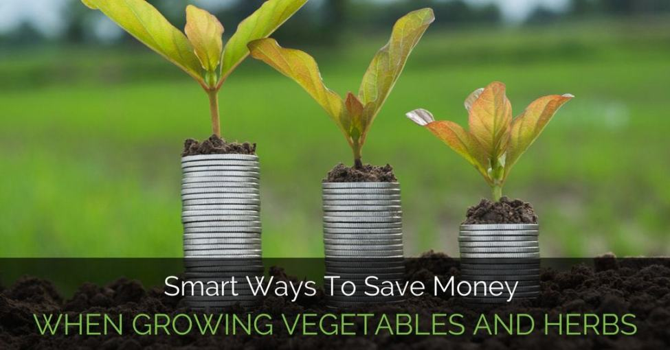 saving-money-gardening