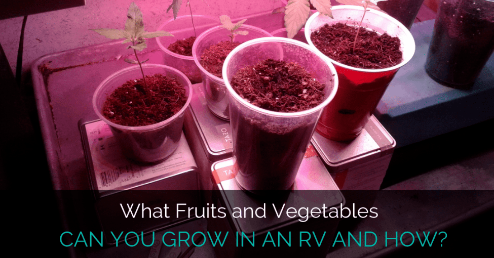 fruits-vegetables-in-rv