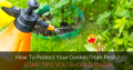 How To Protect Fruits And Flowers Of Your Garden From Pests?
