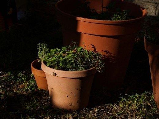 prepare-garden-winter-3