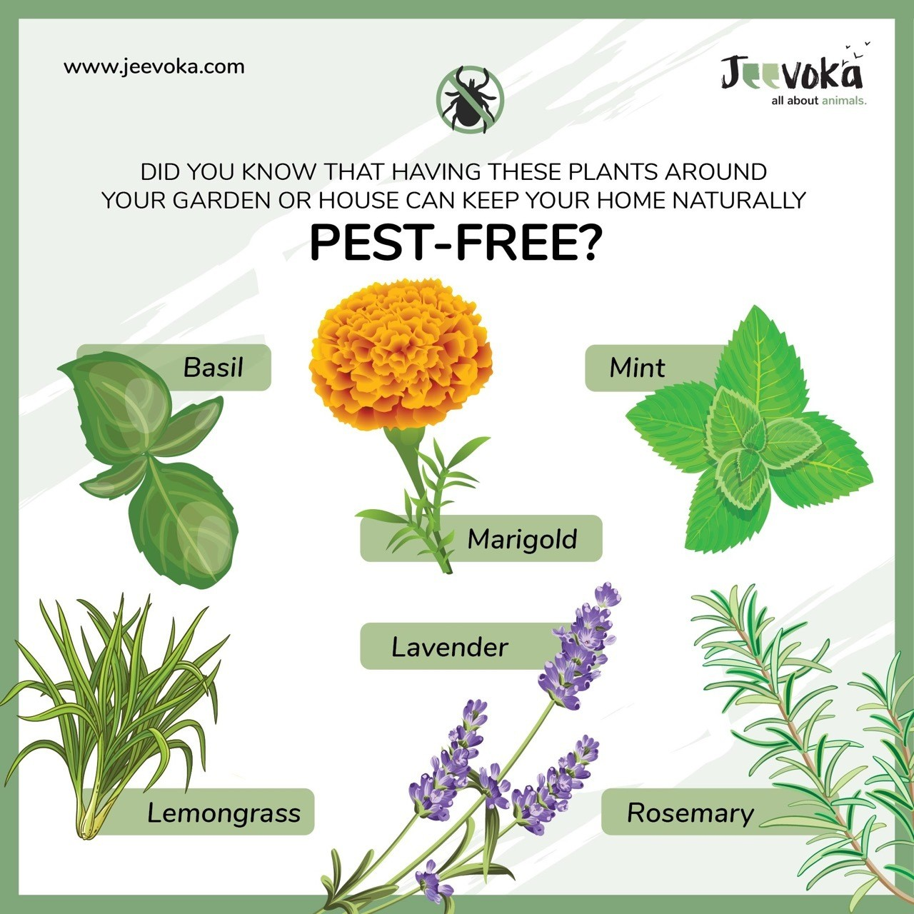 pest free naturally