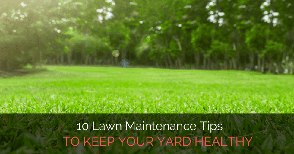 tips-to-keep-lawn-healthy